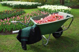 כלי הגינון שיהפכו את הגינה למושלמת